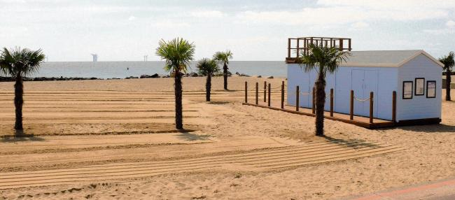 Essex's Palm Trees Face Extinction